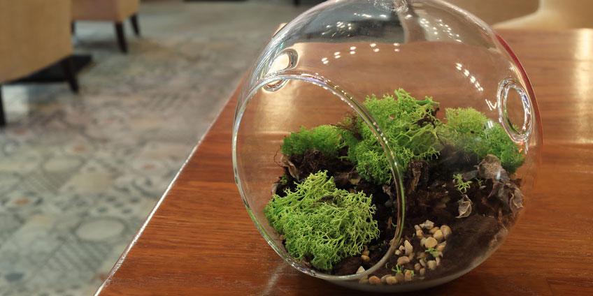 Moss Terrariums